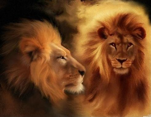lions-192